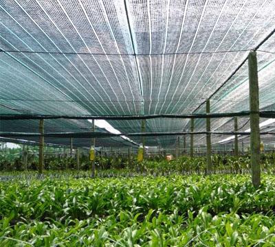 Lưới che nắng - lưới lan - lưới công trình sản phẩm bất ly thân trong đời sống hiện đại